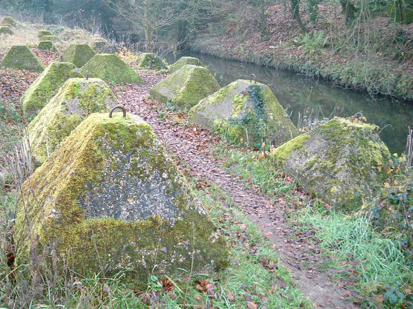 Dragons Teeth beside the River Wey, Waverley Abbey, Surrey. Picture by Tim Denton