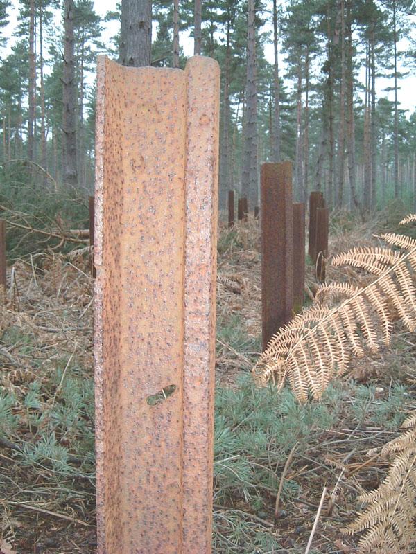 bramshillforest1