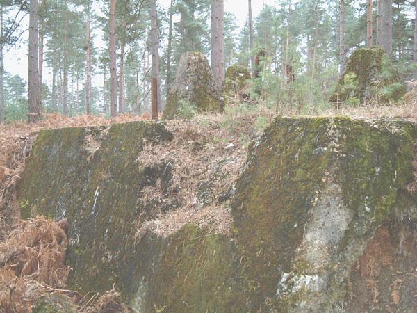 bramshillforest11