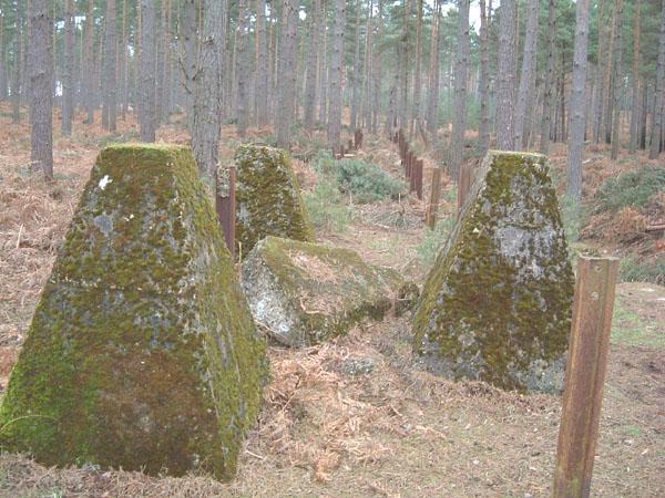 bramshillforest12