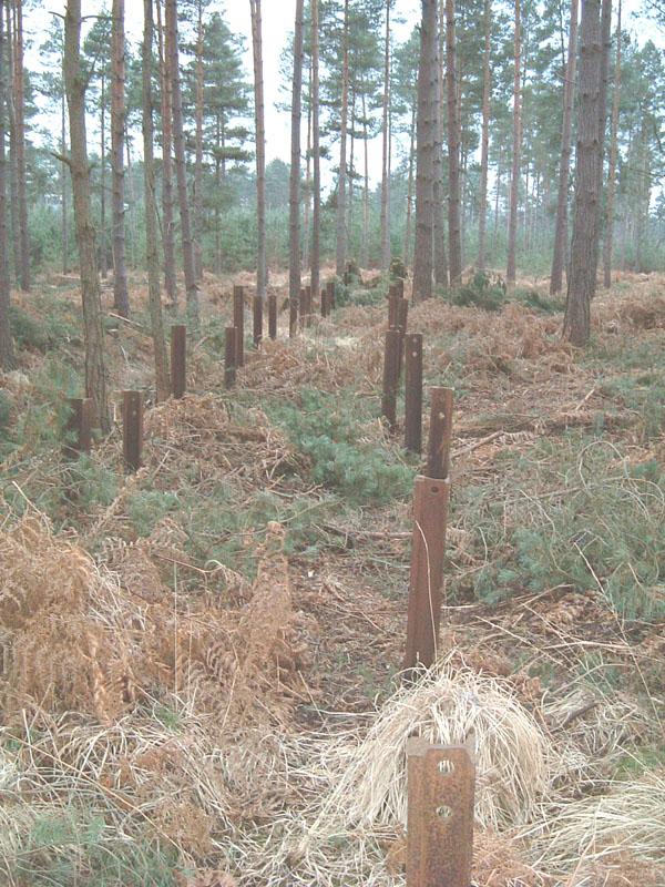 bramshillforest13