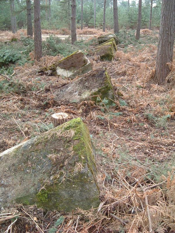 bramshillforest2