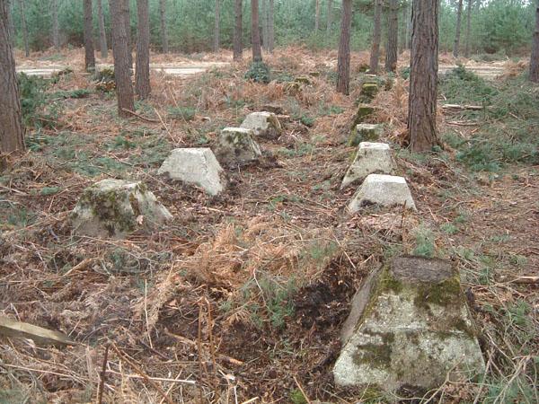 bramshillforest3