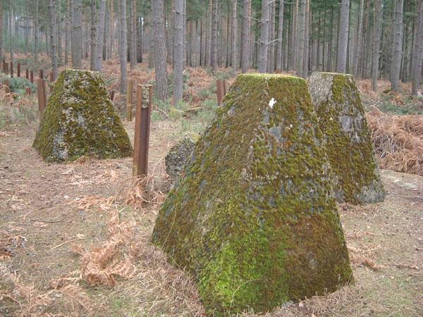 bramshillforest4