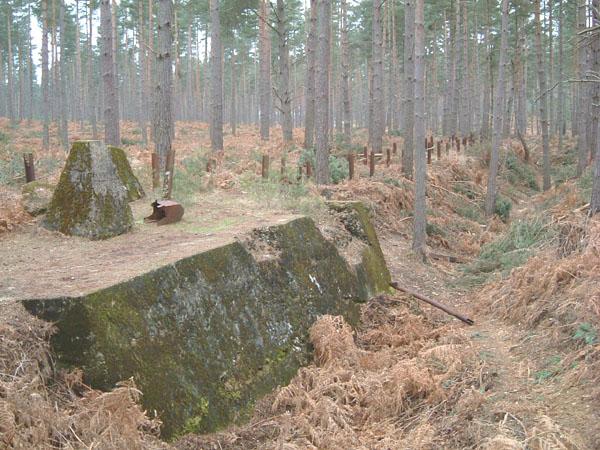bramshillforest5