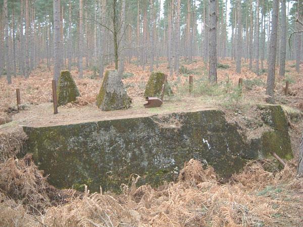 bramshillforest6