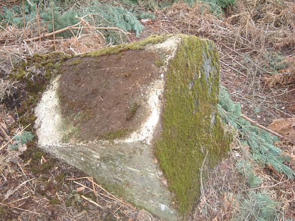 bramshillforest9