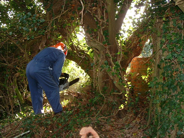 Bruce about to make the first cut into the offending tree. Note how close it is to the pillbox and entrance wall.