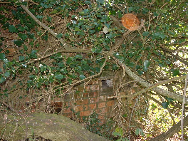 Under attack from ivy and a large tree immediately adjacent.