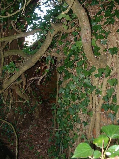 Another photo of the rear of the Pillbox showing the extent of the vegetation.