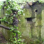 EAST STOKE TYPE 22 PILLBOX WITH OFFENDING TREE!