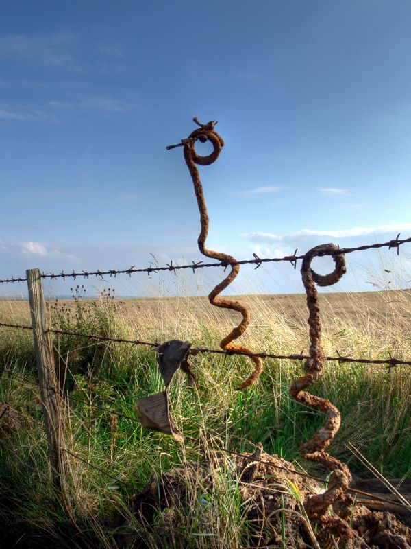 Entanglement supports Beal Farm