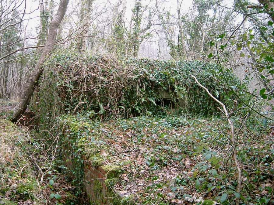 A very overgrown view looking along the brick sided trench.