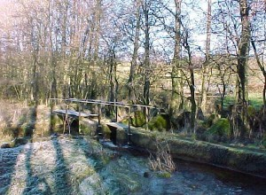 This illustrates the Wall spanning a small stream. This view, looking from the West, also shows how the Wall has become totally overgrown with trees in many places. Nevertheless, the forward edge is still clear and is now a footpath.
