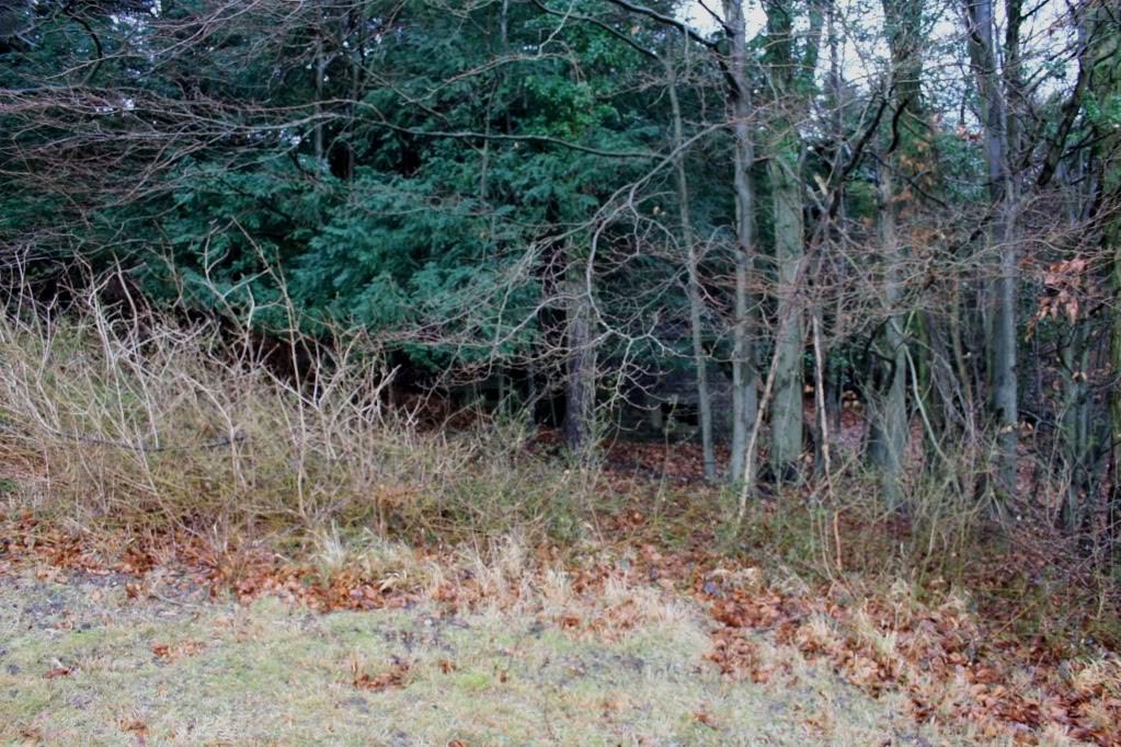 View of pillbox in tree line looking east.