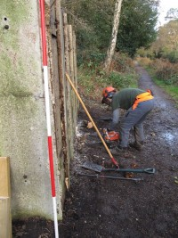 Sara using the chainsaw to cut off protruding stumps to ground level